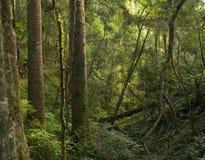 Montagnes de Bunya Image stock