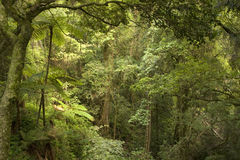 Montagnes de Bunya Photo stock