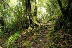 Montagnes de Cameron, Malaisie Photo libre de droits