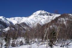 Montagnes de Caucase. Forêt de l'hiver Image libre de droits
