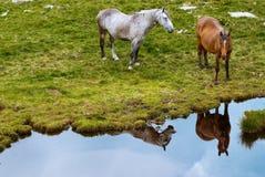 montagnes de chevaux Image stock
