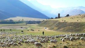 Montagnes de colline de moutons de berger clips vidéos