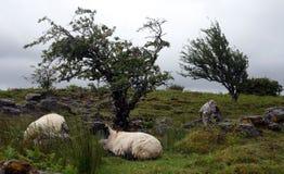 Montagnes de Cuilcagh, Cavan Photographie stock
