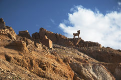 Montagnes de désert Photos libres de droits