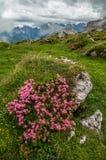 Montagnes de dolomites, par Paternkofel, l'Italie Photographie stock