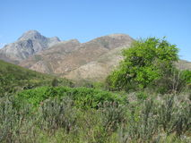 Montagnes de Greyton Images libres de droits