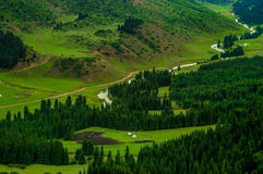 Montagnes de Karacol, rivière, arbres, été photos libres de droits