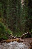 Montagnes de Karacol, rivière, arbres, été images stock