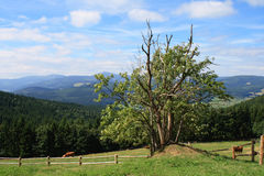 Montagnes de Krkonose Image stock