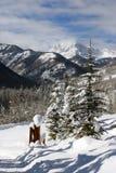 Montagnes de l'hiver photo stock