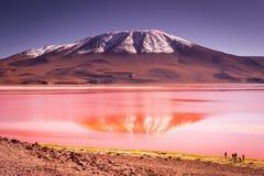 Montagnes de la Bolivie, altiplano Images libres de droits
