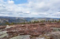 Montagnes de Norvégien de Gautefall Photos libres de droits
