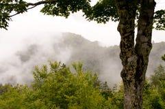 Montagnes de Smokey Photographie stock