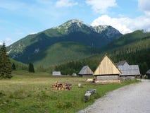 Montagnes de Tatra Image libre de droits