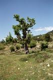 Montagnes de Taureau. Croquis 3. photos libres de droits