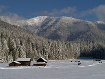montagnes de vaches à granges neigeuses Images stock