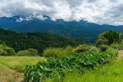 Montagnes de vallée de Kiso en préfecture de Gifu, Japon Image libre de droits