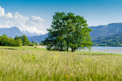 Montagnes derrière un paysage d'été Photographie stock