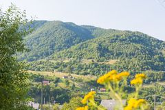 Montagnes des Carpathiens Image stock