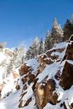 Montagnes du Colorado Photo libre de droits