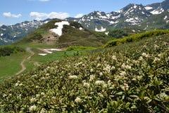 Montagnes du ` s de l'Abkhazie avec la neige et les fleurs photographie stock libre de droits