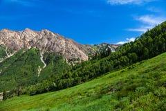 Montagnes en été image stock