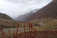 Montagnes en automne avec l'herbe brune et rougeâtre sous le ciel nuageux images stock