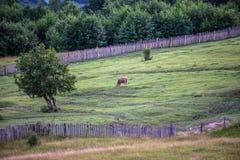 Montagnes en Géorgie Photographie stock