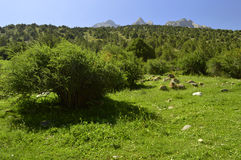 Montagnes en gorge de Galuyan, Kirghizistan Image stock