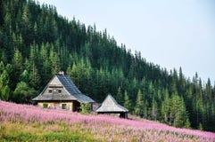 Montagnes en Pologne Photos libres de droits