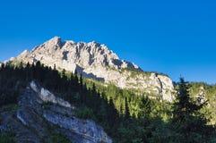 Montagnes et arbres images stock