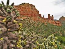 Montagnes et cactus dans Sedona Arizona Photos libres de droits