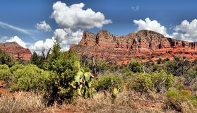 Montagnes et cactus rouges Sedona, Arizona de roche Photographie stock libre de droits