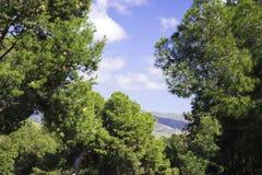 Montagnes et ciel bleu, vue de bâti Gibralfaro, Malaga Le ciel est encadré par des branches des arbres verts coniféres image stock