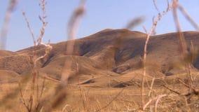 Montagnes et collines de Kazakhstan, le point inférieur de tir banque de vidéos