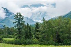 Montagnes et forêt Photographie stock libre de droits