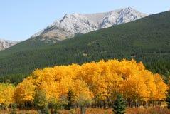 Montagnes et forêts d'automne photographie stock libre de droits