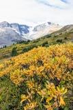 Montagnes et glacier de négligence de champ en automne photo stock