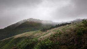 Montagnes et herbe couvertes en nuages et brouillard - Açores, sao Migu Images stock