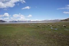 Montagnes et lac au Thibet Images libres de droits