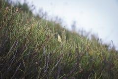 Montagnes et nature d'herbe et fond de modèle Plan rapproché images libres de droits