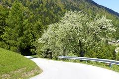 Montagnes et prés alpins Image stock