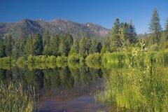 Montagnes et roseaux image stock
