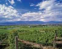 Montagnes et vignes Photo libre de droits