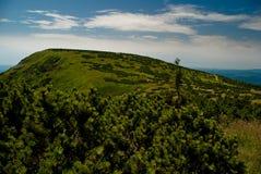 Montagnes géantes en été Image libre de droits