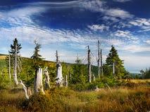 Montagnes géantes - Krkonose, pré en bois Photo libre de droits
