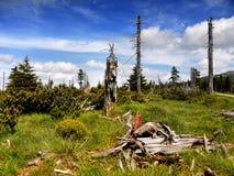 Montagnes géantes - Krkonose, pré en bois Images libres de droits