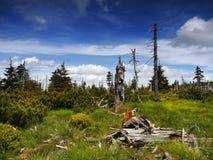 Montagnes géantes - Krkonose, pré en bois Photographie stock