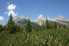 Montagnes grandes de Teton Images stock