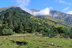 Montagnes le long de la vallée de la rivière de Bilyagidon, Caucase, Russie image stock